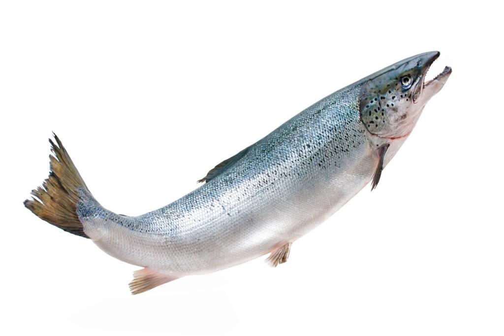venta-de-salmon